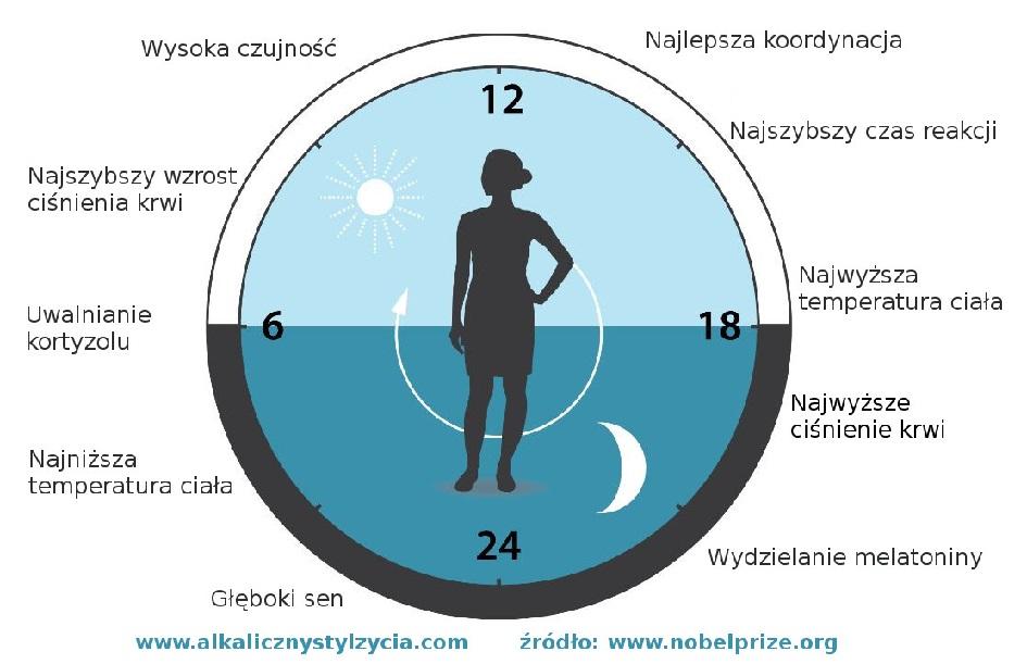 Zegar biologiczny - jak go najlepiej wykorzystać?